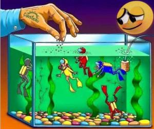 Se non offriamo sempre qualcosa di nuovo i subacquei muoiono!