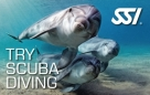 Try scuba Diving è un ottima strategia di Marketing subacqueo dell'Acquisizione