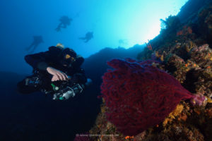 New SCUBA Diving world: CCR